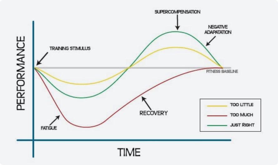 Este gráfico muestra la diferencia de rendimiento entre entrenar demasiado, entrenar muy poco y entrenar en el punto óptimo.